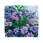 maricarpaccioの紫陽花 Towel handkerchiefs