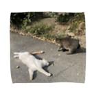 SHOP_KAGENEKOの石巻市網地島のねこ Towel handkerchiefs