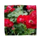 ひなの花(赤) Towel Handkerchief
