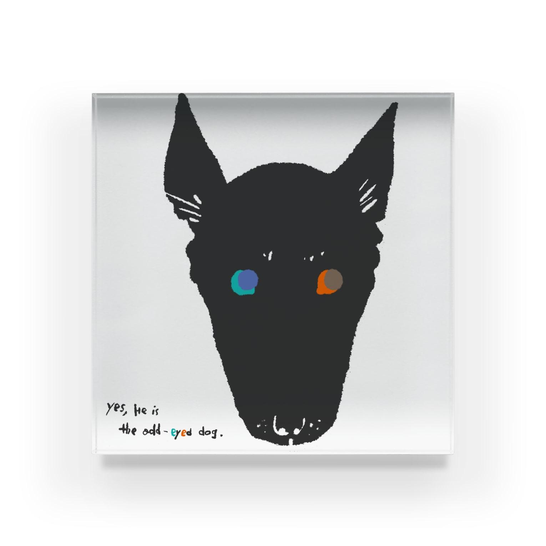 mya-mya=MIYA JUNKO's shop 02のodd-eyed dog Acrylic Block
