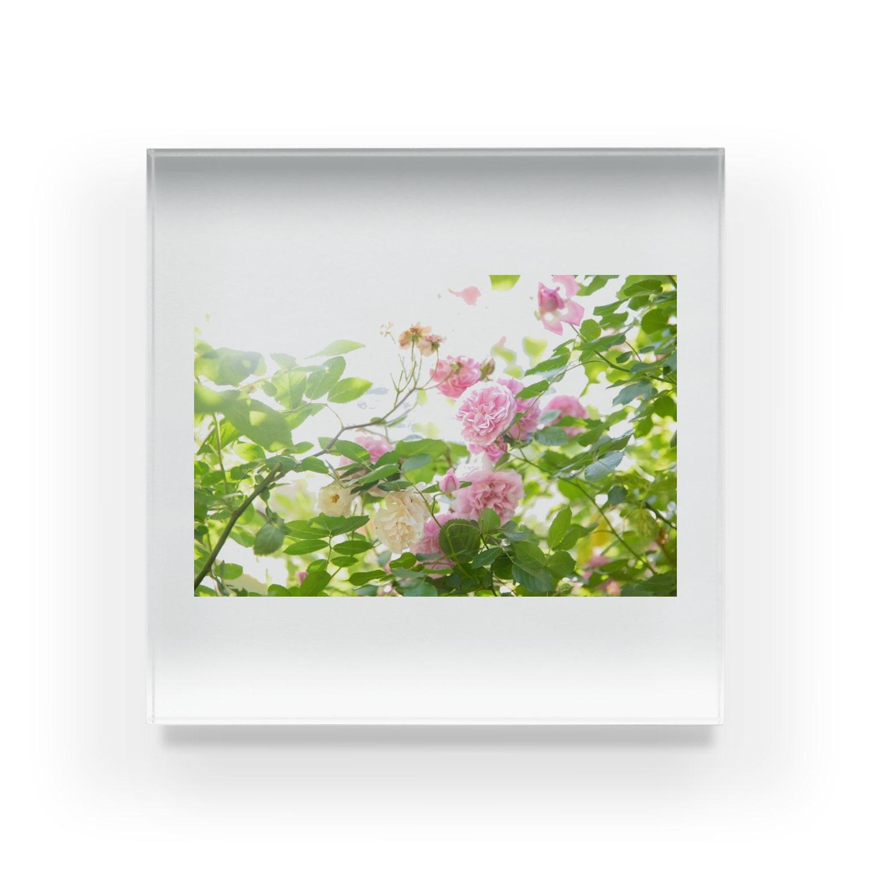 BLACKANDWHITEのRose Garden Acrylic Block