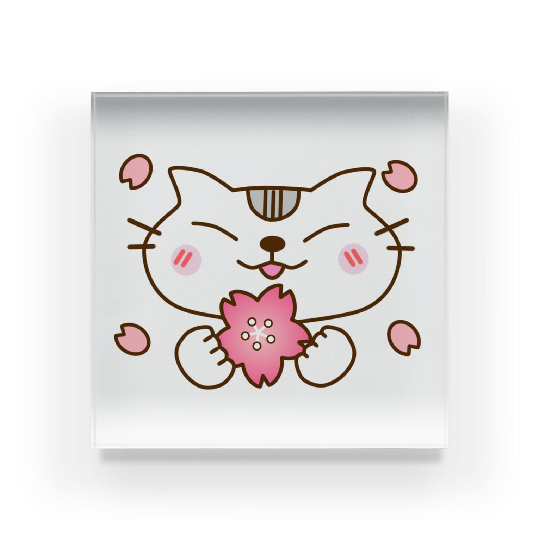 eigoyaの桜とアメショー Acrylic Block