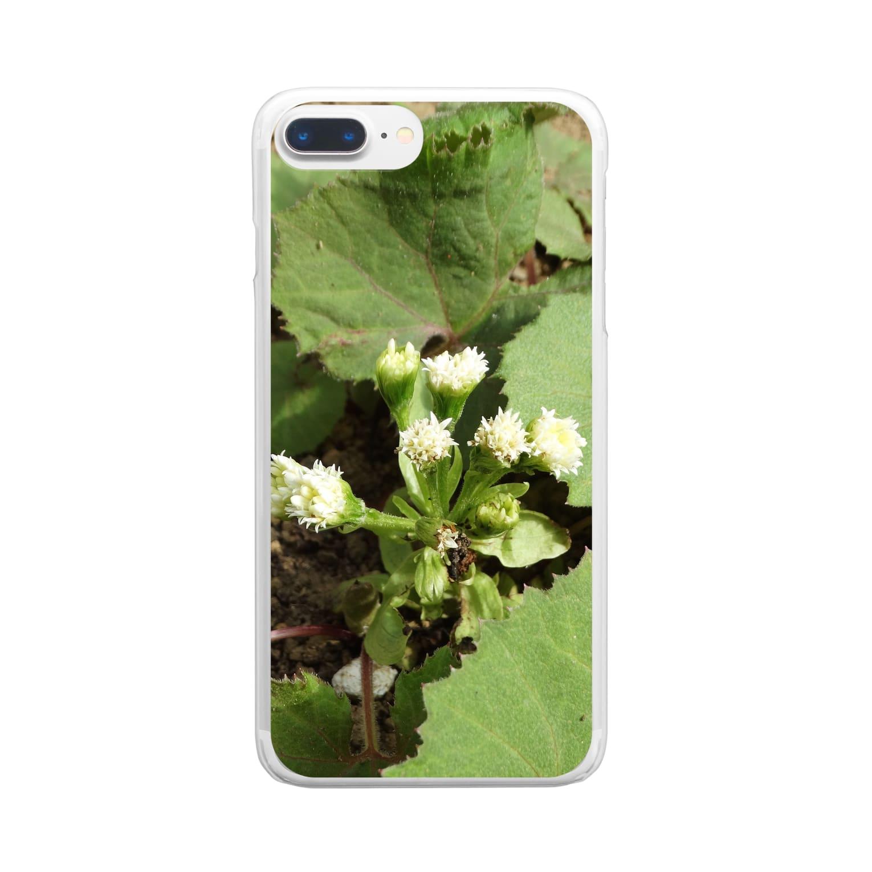 FUCHSGOLDの日本の野菜:フキの花 Fuki flowers / Petasites japonicus Clear smartphone cases