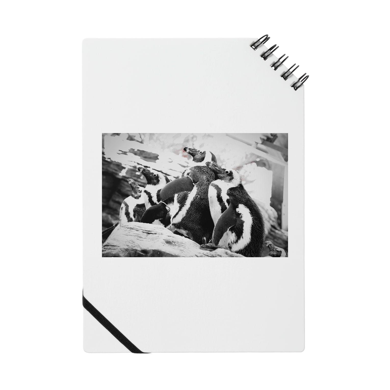 Kengo Kitajimaのペンギン Notes