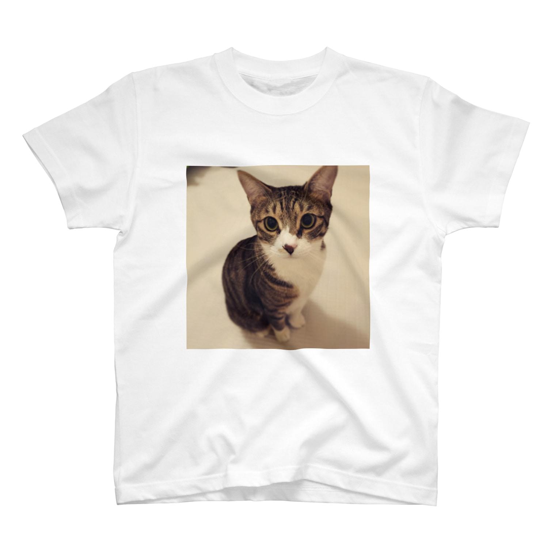 ねこまる広場のらいちさんのおすまし☻ T-shirts
