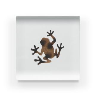 茶色いカエル Acrylic Block
