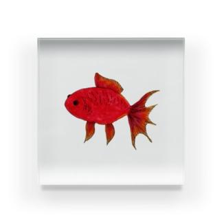 赤い金魚 Acrylic Block