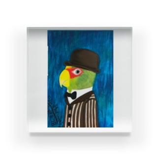 コボウシインコ紳士 背景あり Acrylic Block