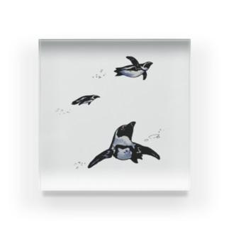 空飛ぶペンギン Acrylic Block