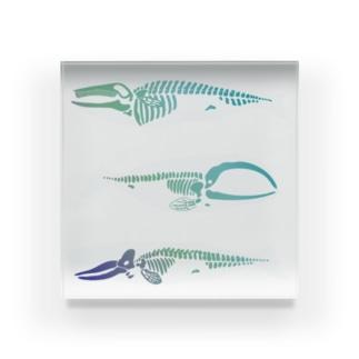 whalebone Acrylic Block