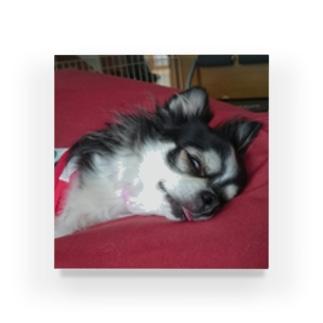 寝顔が怖いほうの犬 Acrylic Block