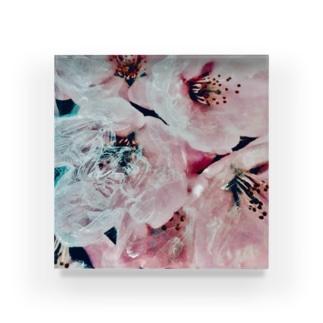 Blossoms : shine  Acrylic Block