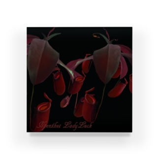 Npenthes LadyLuckシリーズ Acrylic Block