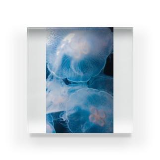 ミズクラゲ Acrylic Block