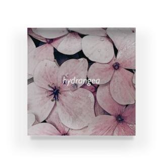 hydrangea(logo) Acrylic Block