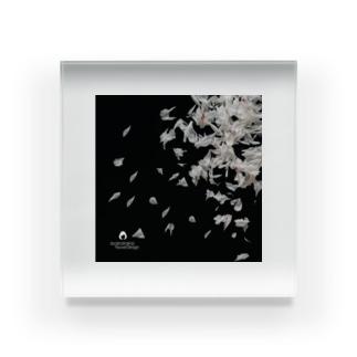 芍薬の散り際 Acrylic Block