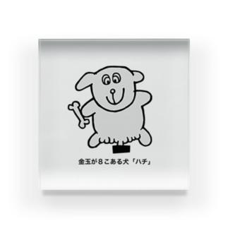 金玉が8こある犬「ハチ」 Acrylic Block