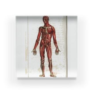 人体生理学 アクリルブロック