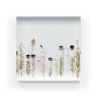 水草標本と Acrylic Block