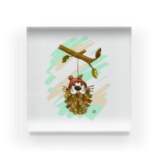みのむし、ぽんちゃん Acrylic Block