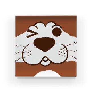 犬のぽんちゃん、ドアップ Acrylic Block