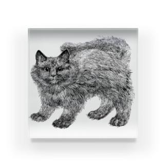 ふわふわの仔猫 Acrylic Block