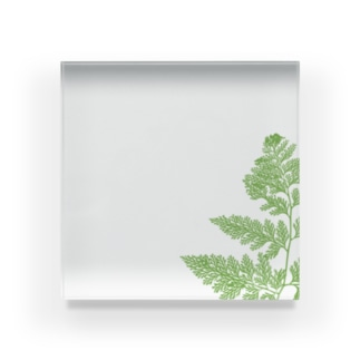 植物標本_シダ Acrylic Block