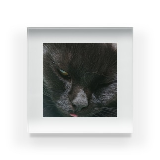 舌が出てる黒い猫 Acrylic Block