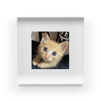 可愛い猫ちゃん💓 Acrylic Block