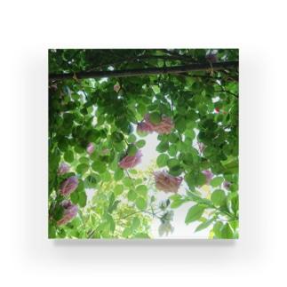 まー坊の庭002 Acrylic Block