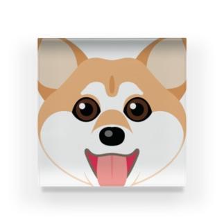 かわいい柴犬 Acrylic Block