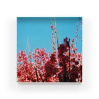 梅盛り Acrylic Block