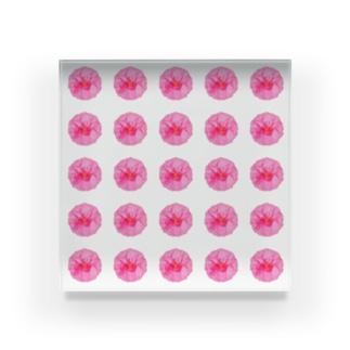 並びお花 Acrylic Block