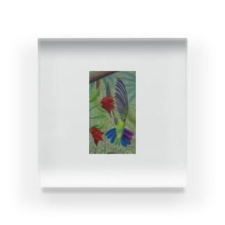 トロピックバード Acrylic Block
