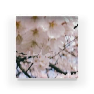 おととしの桜 Acrylic Block