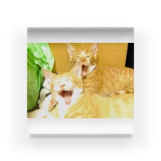 猫2 Acrylic Block