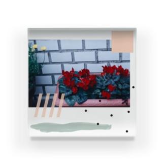 シクラメン Acrylic Block