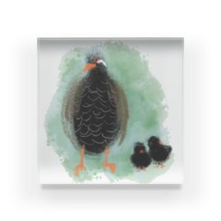 ヤンバルクイナの親子 Acrylic Block