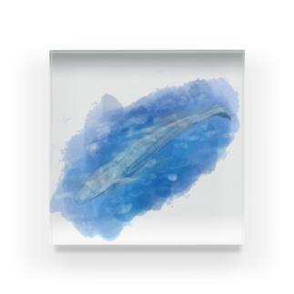 いきものイラスト(シロナガスクジラ) Acrylic Block
