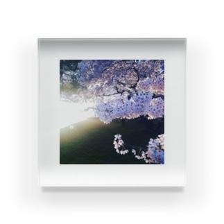 さくらちゃん Acrylic Block