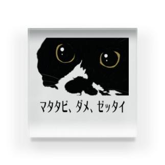 ヒゲくんマタタビ、ダメ、ゼッタイ Acrylic Block