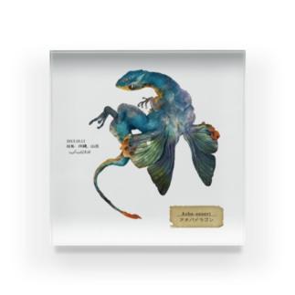 アオバドラゴンの標本 Acrylic Block