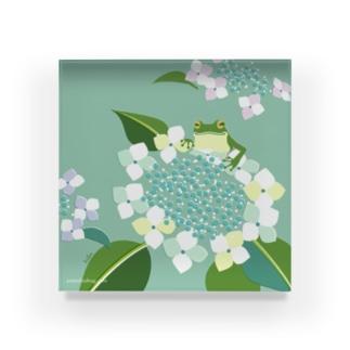 azisai frog Acrylic Block