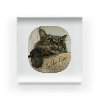 Tabby Cat Acrylic Block