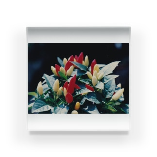 カラフル気分 Acrylic Block