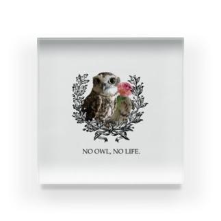 NO OWL, NO LIFE. Acrylic Block