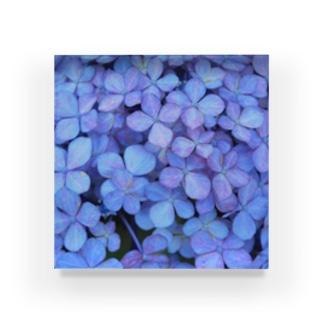 blue hydrangea Acrylic Block