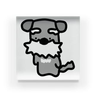 シュナ!はかしこそうな犬! Acrylic Block