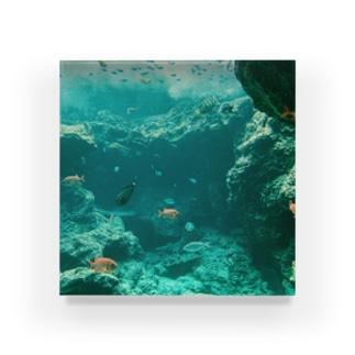 泳ぐ Acrylic Block