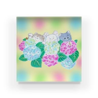 紫陽花と猫 Acrylic Block